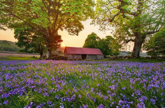 Фото бесплатно поле, цветы, колокольчики