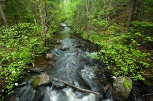 Бесплатные фото речка, лес, деревья, камни, течение, природа