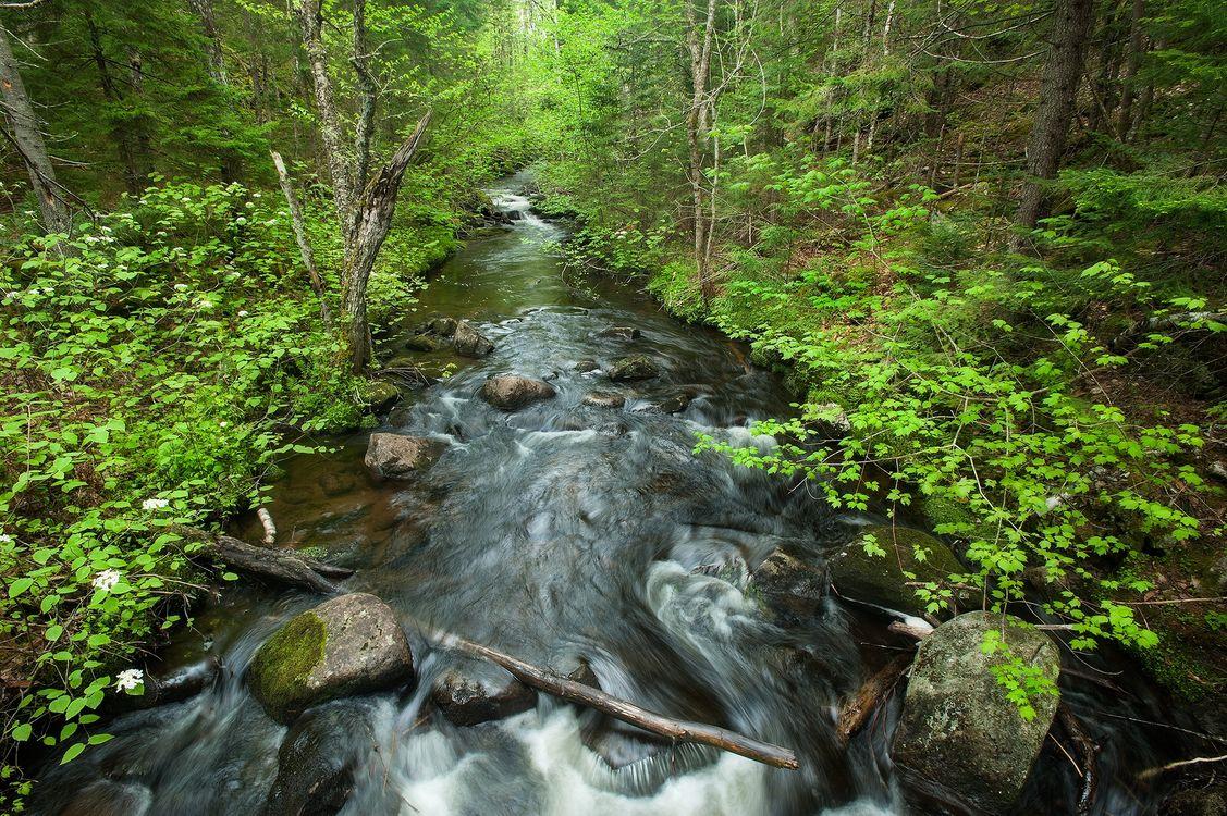 Фото бесплатно речка, лес, деревья, камни, течение, природа, природа