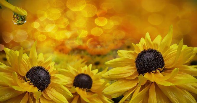 Заставки флора, цветок, панорама