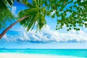 Заставки тропики, пальмы, океан