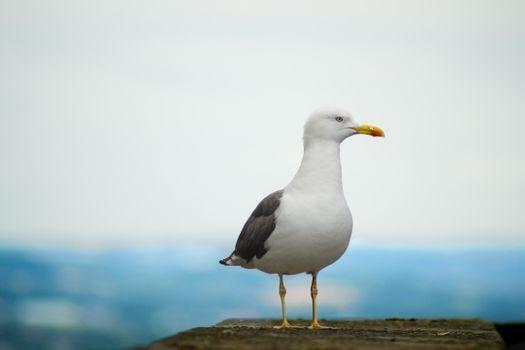 Фото бесплатно птица, животное, морские птицы