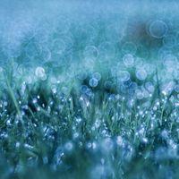 Заставки растения, капли, трава