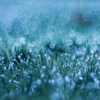 Заставки трава, капли, роса