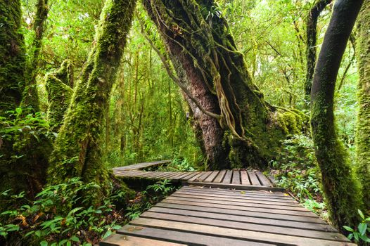 Photo free forest, tropical, trees