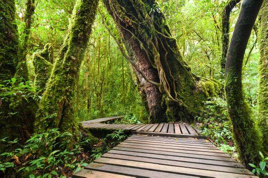 Фото бесплатно лес, тропик, деревья