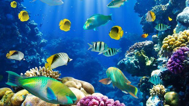 Рубки и коралловые рифы