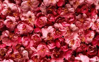 Заставки аннотация, цвета, цветы