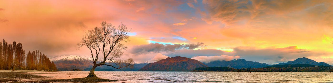 Фото бесплатно Lake Wanaka, Wanaka Tree, South Island
