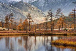 Лиственницы на фоне гор · бесплатное фото