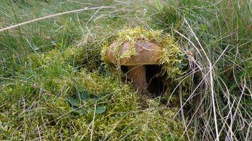 Фото бесплатно природа, гриб, мох