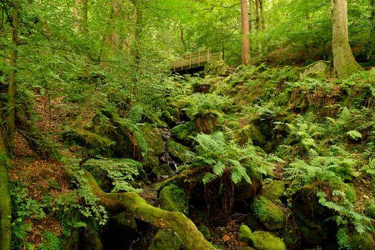 Photo free stones, trees, vegetation