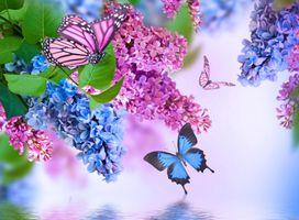 Фото бесплатно букет сирени, бабочки, флора