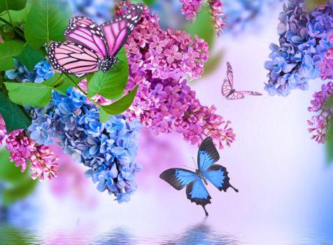 Photo free bouquet of lilac, butterflies, flora