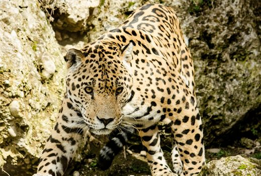 Photo free leopard, wildlife, zoo