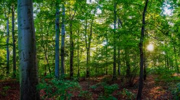 Photo free forest, sunlight, leaves