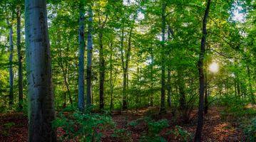 Фото бесплатно лес, лучи солнца, листья