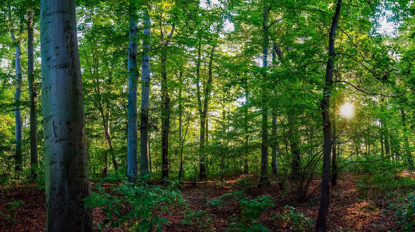 Фото бесплатно лес, лучи солнца, листья, лето, зелень, деревья, природа, природа