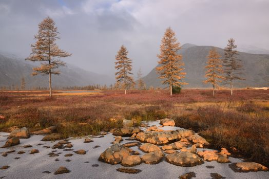 Boulders and larch · free photo