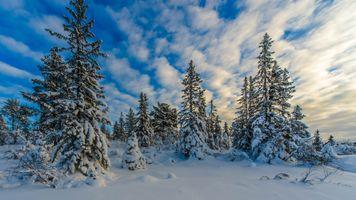 Фото бесплатно закат, зима, снег, сугробы, ели, деревья, природа, пейзаж, winter, norway