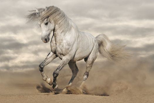 Photo free amazing, beauty, horse