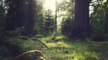 Фото бесплатно осень, трава, расцветает, деревья, зелень, лучи солнца, лес, пейзаж, природа, дерево