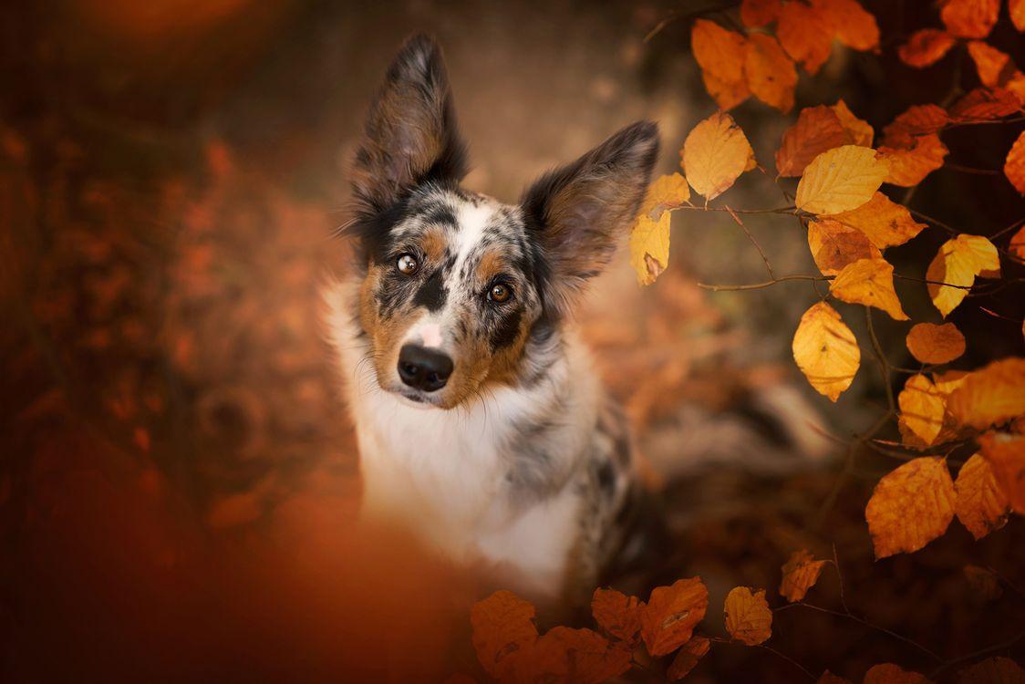 Пятнистая собака с осенней листвой · бесплатное фото