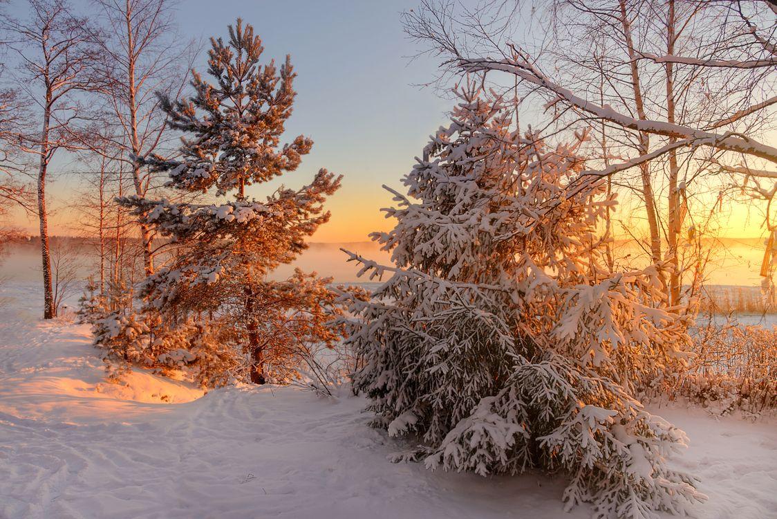 Фото бесплатно Veshchevo, Russia, зима - на рабочий стол