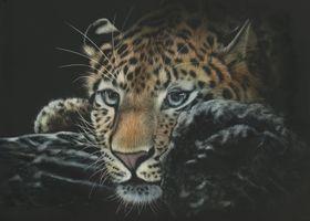 Фото бесплатно леопард, дикая кошка, морда, хищник, взгляд, art