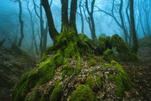 Mysterious forest in the Stavropol region · free photo