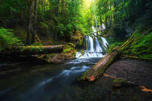 Бесплатные фото Lower Panther Creek Falls,Washington,лес,водопад,деревья,речка,природа