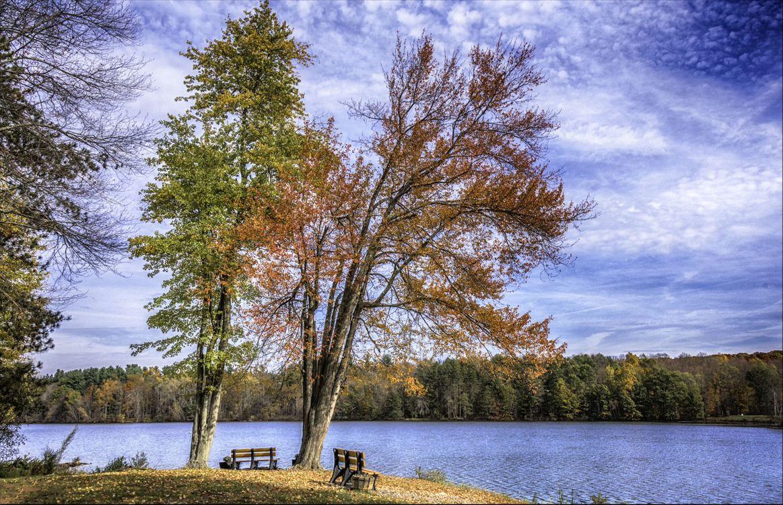 Фото бесплатно Chadwick Park, осень, озеро, деревья, лес, лавочка, небо, природа, место отдыха, пейзаж, пейзажи - скачать на рабочий стол
