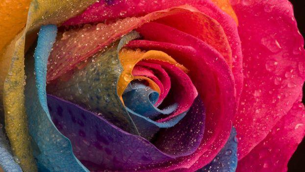 Заставки розы, цветы, вода