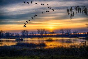 Закат в Грей Лодж и стая птиц