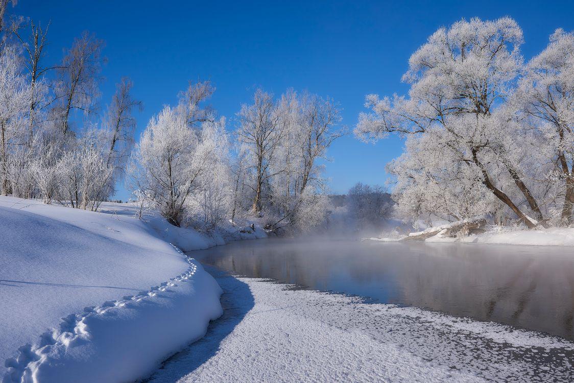 Фото бесплатно следы, зима, деревья - на рабочий стол
