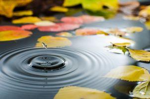 Фото бесплатно капли, солома, осень