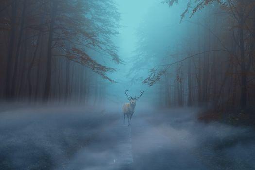 Заставки лес,деревья,дорога,туман,рассвет,олень,art,пейзаж