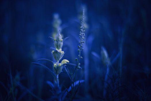 Заставки растения, разнообразие, макро