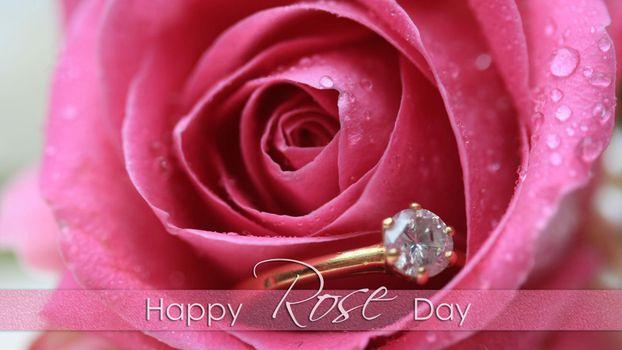 Бесплатные фото роза,цветок,бутон,кольцо