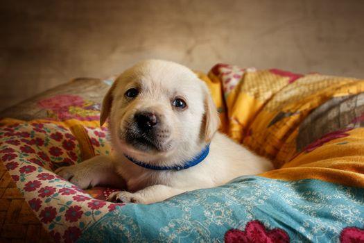 Cute puppy · free photo
