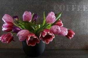 Цветы в домашних условиях