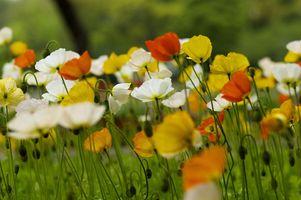 Заставки цветочное поле, разноцветные цветы, поле