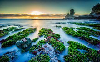 Бесплатные фото Колония мидий,пляж Мотукейки,закат,море,скалы,скалистый берег,пейзаж