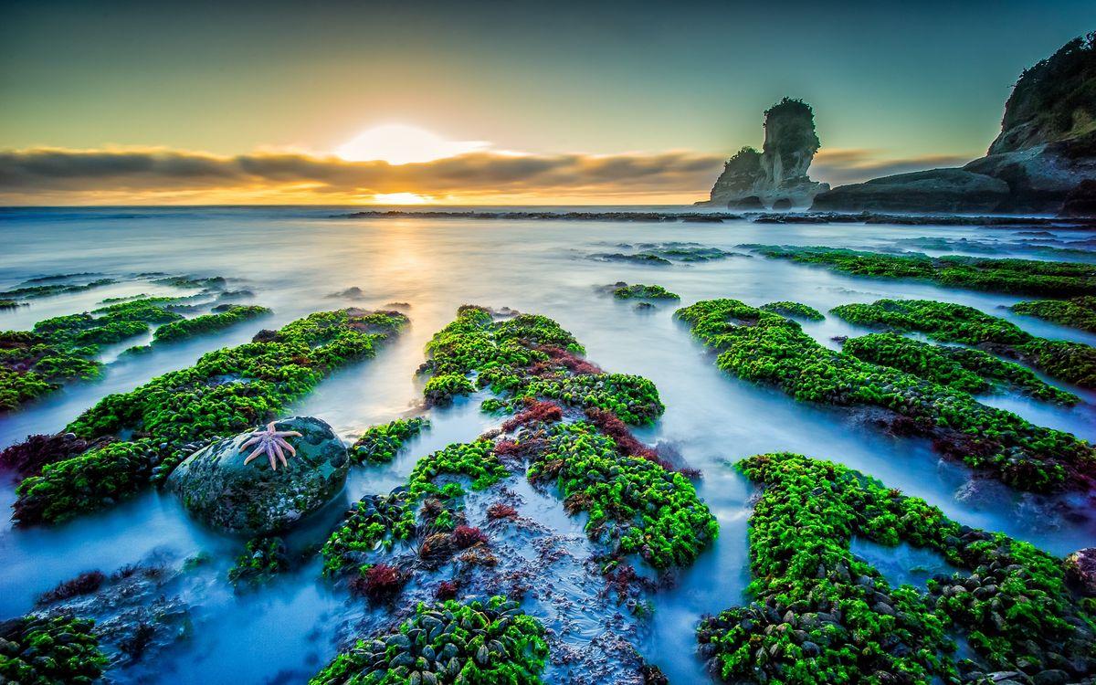 Фото бесплатно Колония мидий, пляж Мотукейки, закат, море, скалы, скалистый берег, пейзаж, пейзажи