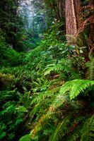 Бесплатные фото Redwood National Park,Mill Creek State Park,лес,деревья,пейзаж