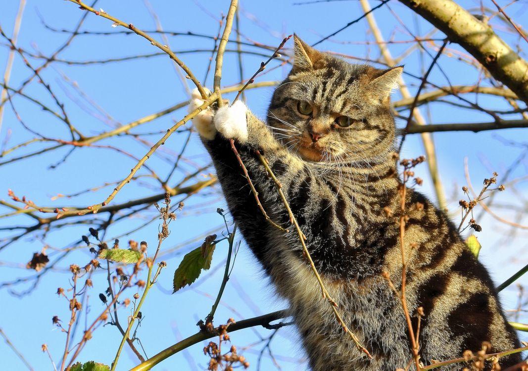 Фото бесплатно кошка, дерево, ветки - на рабочий стол