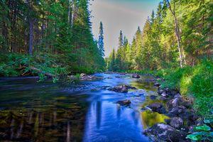 Бесплатные фото Финляндия,река,лес,деревья,камни,течение,природа