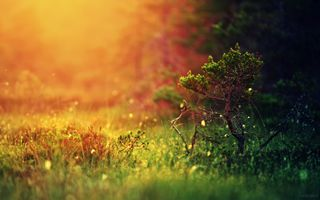 Photo free forest, grass, light
