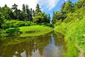 Фото бесплатно озеро, лето, водоём, деревья, небо, природа, пейзаж