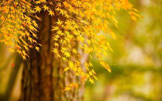 Фото бесплатно осень, боке, листья